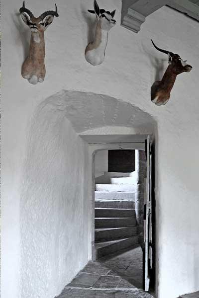 Escalier à vis de la tou